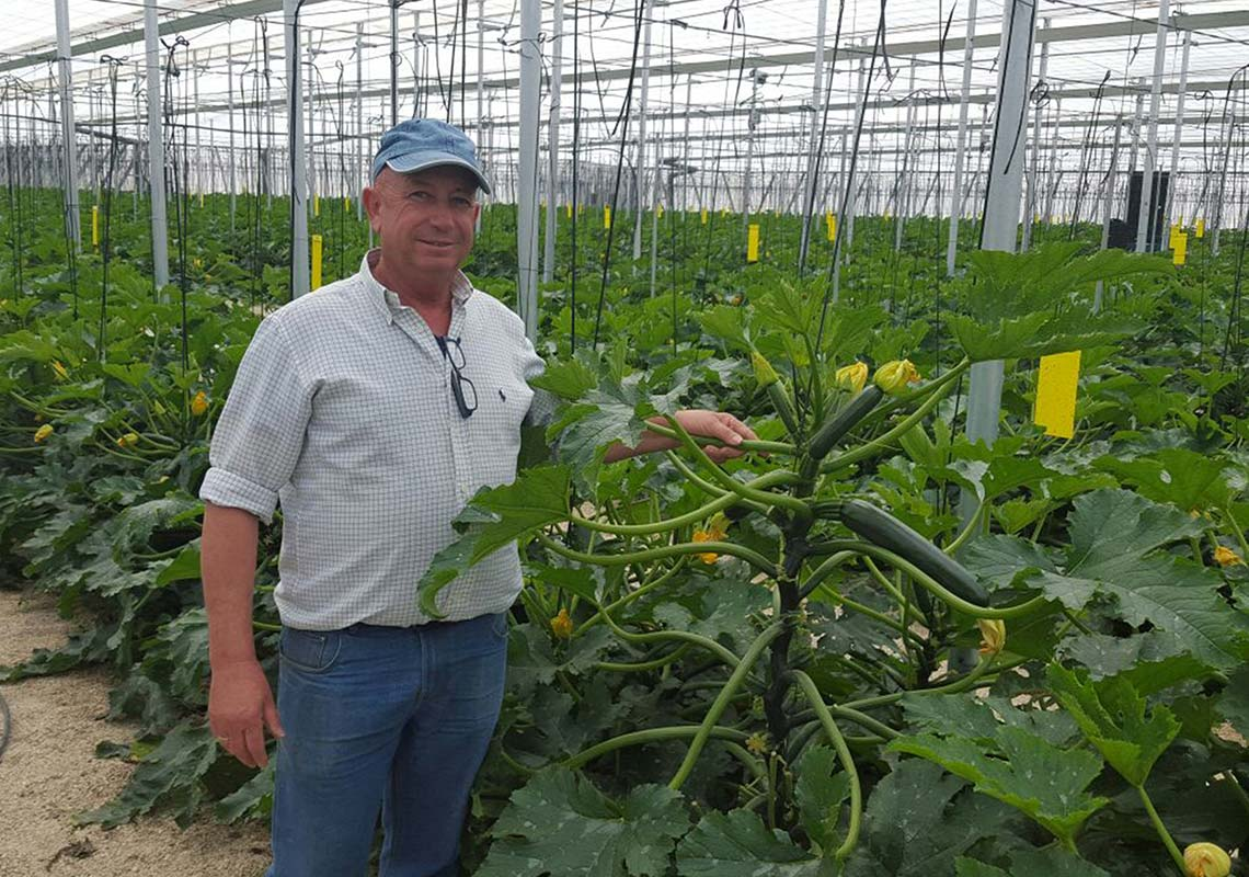 Photograph of a farmer holding a courgette plant at Barfoots Espana, Almeria