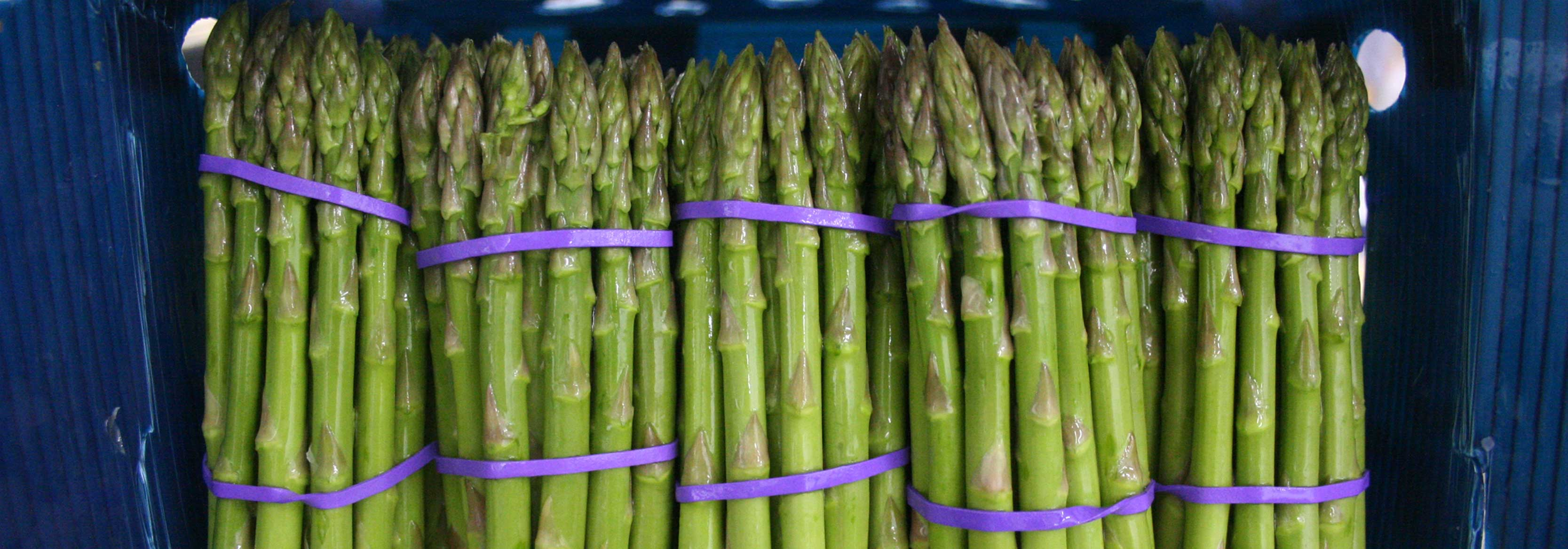 Photograph of Asparagus spears boxed and ready for shipping by the Barfoots Nazca farm in Peru