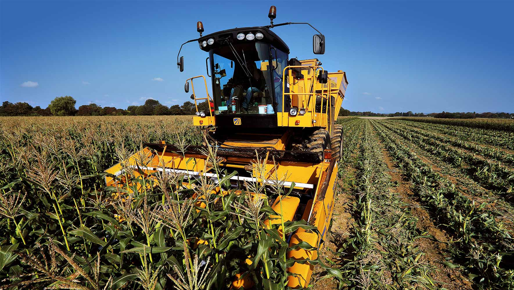Photograph of a sweetcorn harvester in operation on the Barfoots UK farm