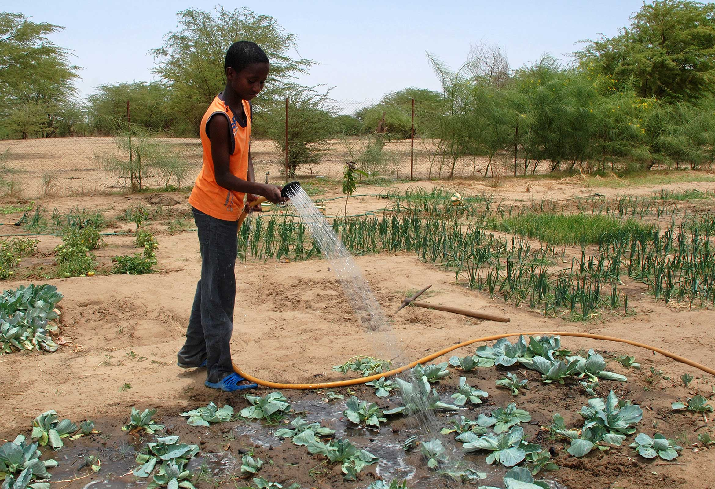 Photograph of a Senegalese pupil watering plants on the Barfoots SCL farm in Senegal